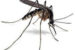 Travel health mosquito